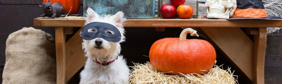 Halloween for Pets 940