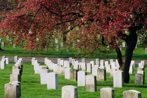 Arlington Cemetery 200
