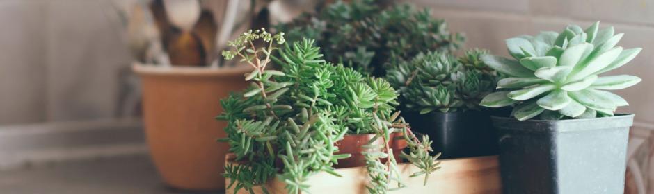 Succulent Planters 940